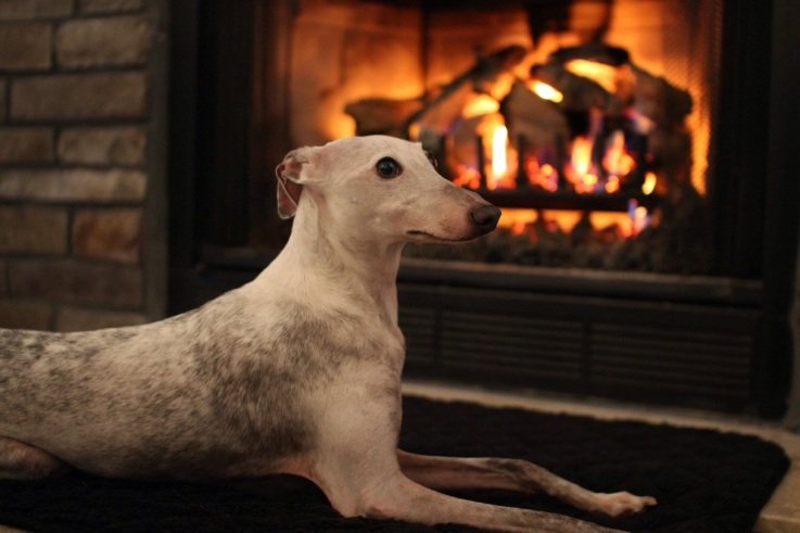 Greyson by the Fire