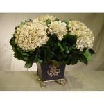 Greyson Place Ivory Hydrangea